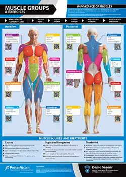 Muscle Groups & Exercises Gym Poster | Anterior & Posterior Muscles & Exercises | La ...